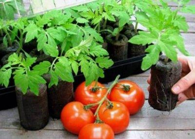 Благоприятные дни для посадки семян помидоров на рассаду в феврале и марте