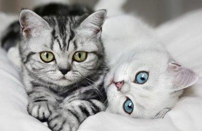 Кошки умеют различать свое имя в человеческой речи