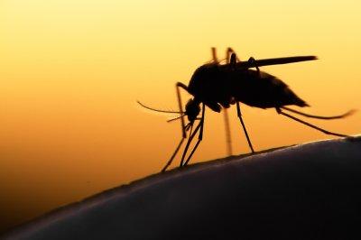 Ученые нашли музыку, которая может отпугивать комаров