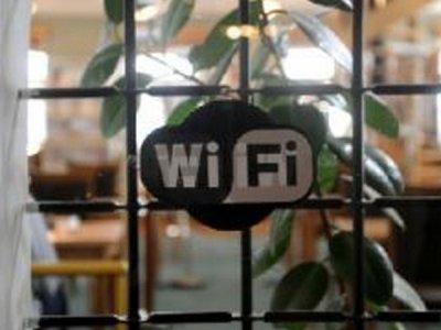 Почему возле роутера Wi-Fi гибнут растения