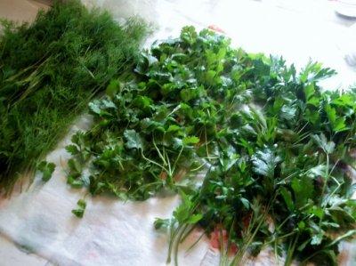 Какую зелень можно замораживать на зиму в морозилке