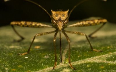 Генетически измененный грибок уничтожил 99% комаров-переносчиков малярии