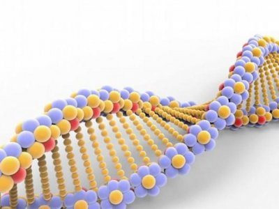 В Китае родился третий ребенок с отредактированной ДНК