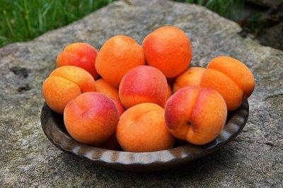 Медики рассказали, кому вредно есть абрикосы