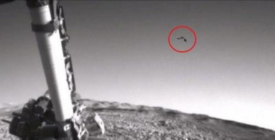 На снимках с Марса обнаружили парящую птицу