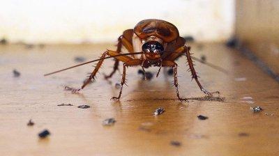 Ученые заявили, что тараканов невозможно уничтожить ядом