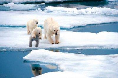 В Арктике обнаружили снег с пластиком