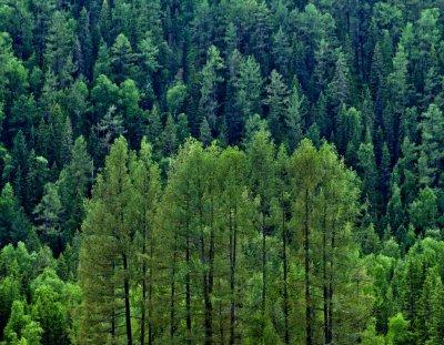Ученые: Рост растительности на Земле снизился на 59%