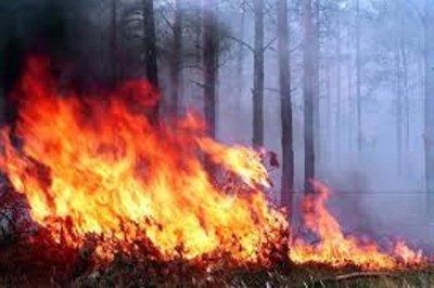 Пожар в Катон-Карагайском парке на востоке Казахстана мог начаться из-за НЛО