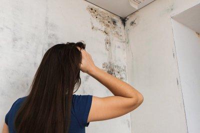 Эксперты рассказали, почему плесень может появиться в квартире и как с ней бороться
