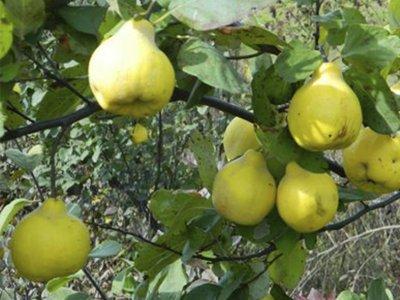 Медики назвали самые полезные фрукты ноября