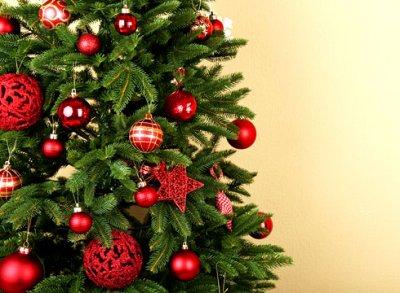 Эксперт рассказала, как выбрать елку без ущерба для окружающей среды