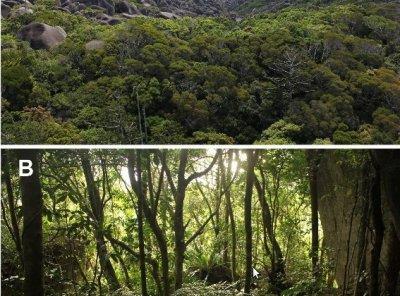 Ученые: В Австралии нашли «затерянный мир» с новыми видами ...
