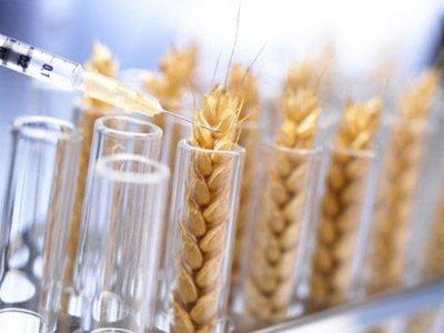 В России разрешили ГМО-зерновые