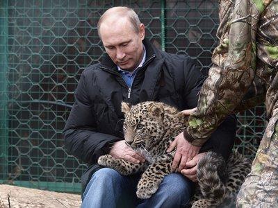 От стерхов к леопардам: Владимир Путин побывал в клетке с диким зверем