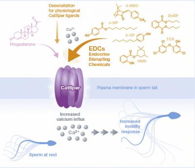 Названы очищающие и гигиенические средства, которые нарушают функцию спермы