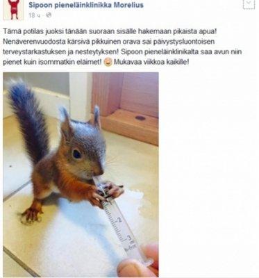 В Финляндии раненый бельчонок сам пришел за помощью в ветеринарную клинику