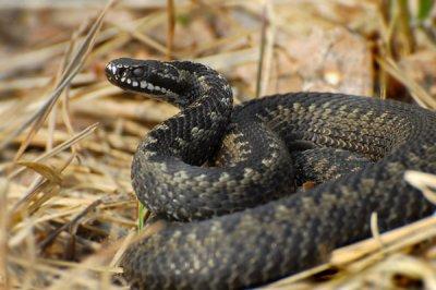 Палеонтологи установили, как змеи лишились ног и начали ползать