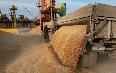 Экспорт зерна из России вырос на 34,5%