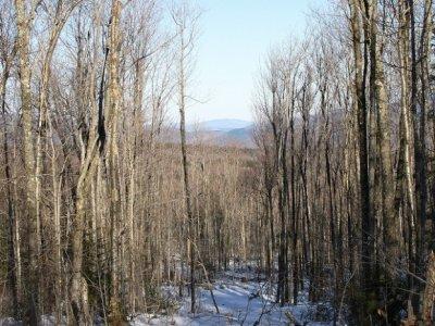 Экологи бьют тревогу из-за вырубки лесов в США